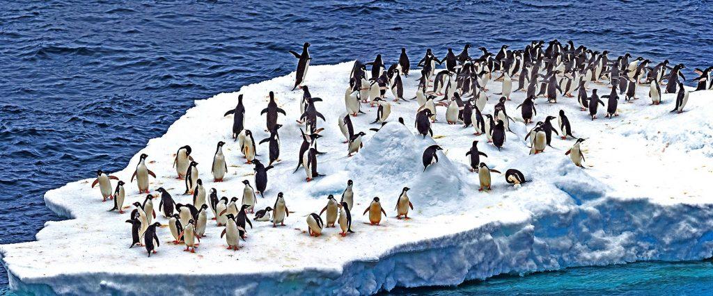 Kaiserpinguine in der Arktis