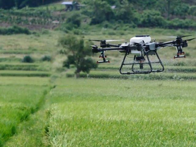 DJI AGRAS Landwirtschafts-Drohne im Einsatz